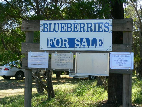blueberry-farm-sign2