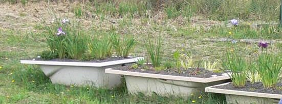 Reed bed system - greywater